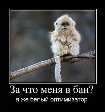 мем про SEO-оптимизатора
